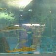 [翌日]宮島水族館(その1)