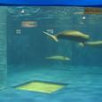 [翌日]宮島水族館(その3)