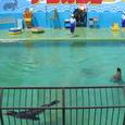 [翌日]宮島水族館(その6)